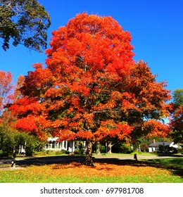 Autumn tree with red leaves in park