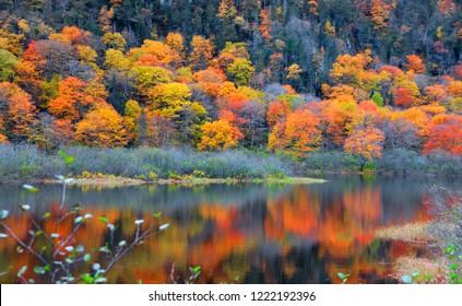 Autumn tree reflections in Parc de la national Jacques Cartier