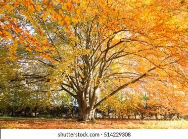Autumn tree with sunlight