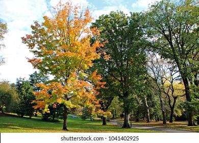 Autumn tree in a sunny autumn park lit by sunlight. Central Park, New York City.