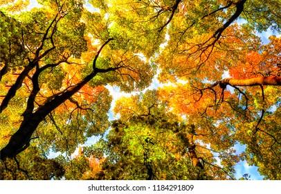 Autumn tree tops on sky background. Autumn trees sky view. Autumn tree tops in autumn forest scene