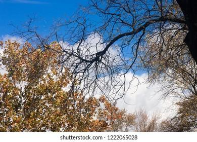 Autumn trees against blue cloudy sky