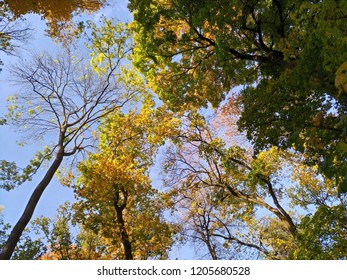 Autumn trees against the sky clean, environmentally friendly, beautifull fall colors