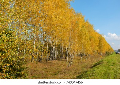 Autumn trees along the road.