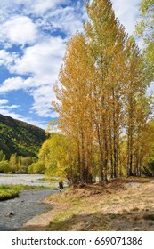 Autumn trees in Arrowtown New Zealand