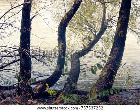 Autumn Trees Austria Stock Photo Edit Now 757537252 Shutterstock