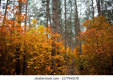 Autumn trees in a beautiful forest straight tall trunks without branches covered with bark in the evening at dusk