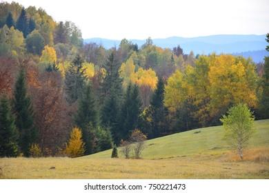 autumn trees birch meadow mountains