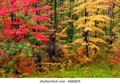 Autumn trees in a brilliant colors shot in Michigan upper peninsula Haiwatha state forest