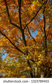 autumn trees with colored leaves
