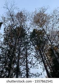 Autumn Trees in Duluth Minnesota
