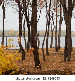 autumn trees in front of sibirian river ural