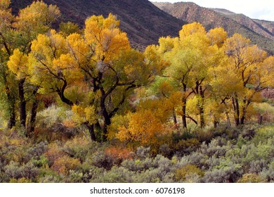 Autumn trees in full color