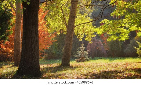 Autumn trees in the garden with sunlight / Pannonhalma Arboretum, Hungary
