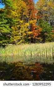 Autumn trees, grasses, reflection, bog, Perimeter Trail, Bradley Farm Preserve, Topsham, Maine, USA
