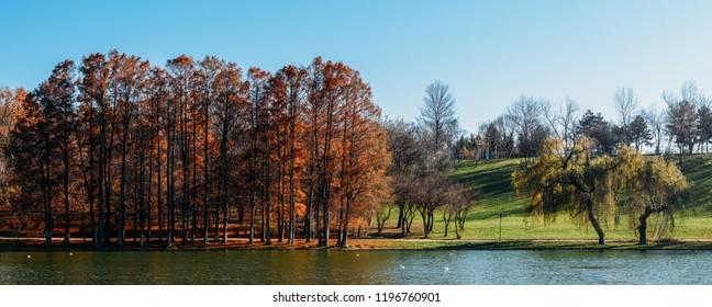 Autumn Trees Landscape Of Tineretului Park In Bucharest, Romania In Fall Season