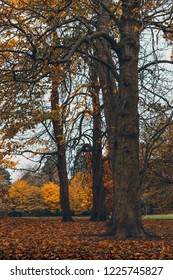 Autumn Tree's in Middlesbrough.