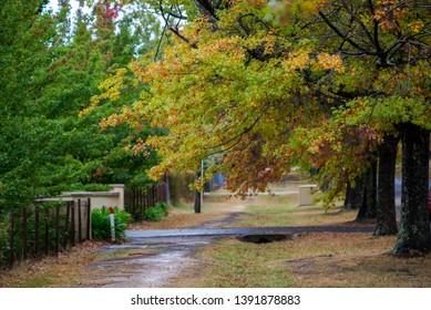Autumn Trees Mount Macedon Victoria.