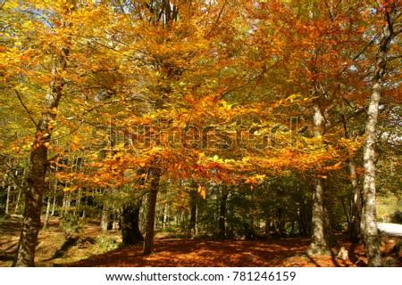 Fall leaves in parque Nacional Peneda Geres, Portugal