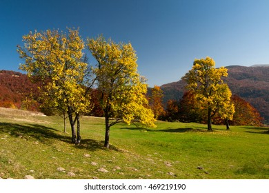 Autumn trees on the meadow over blue sky background