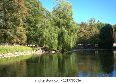 Autumn trees on the shore of the lake