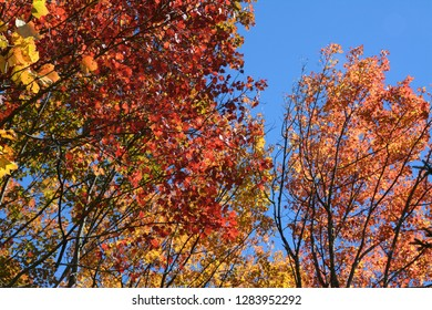 Autumn trees, Perimeter Trail, Bradley Farm Preserve, Topsham, Maine, USA