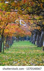 Autumn trees portrait