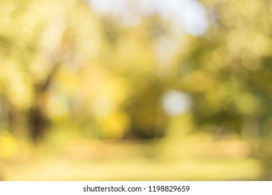 Autumn trees in the public park out of focus, natural bokeh background
