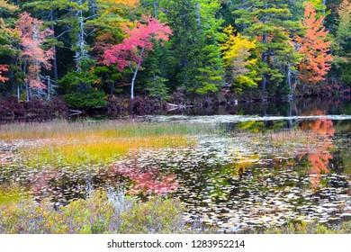 Autumn trees, reflection, Somes Pond, Somesville, Mount Desert Island, Maine, USA