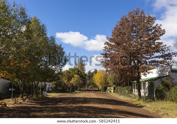 Autumn trees in Rhodes