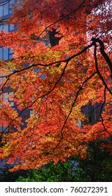 Autumn trees at Rikugien Garden in Tokyo, Japan.