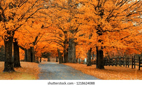 Autumn trees i a row by the path