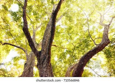 Autumn trees. Season of autumn colors.