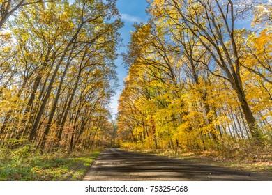 Autumn trees in sunbeams, an autumn landscape
