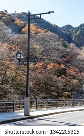 autumn trees with traditional japanese lantern pole light