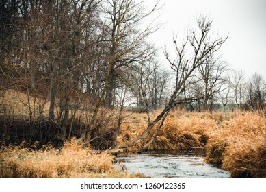 Autumn trees in a view of small wild river