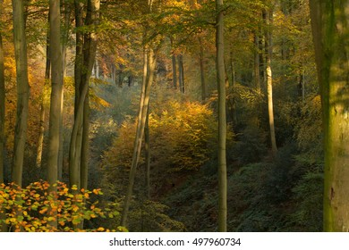 Autumn Trees With Yellow Orange Leaves In The Forest Of Grafenberg / Duesseldorf
