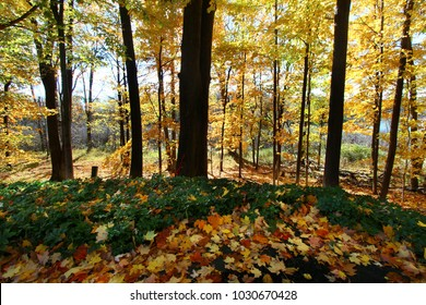 Autumn trees with yellow, orange, red and green leaves in the woods