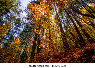 Autumn Trees in Yosemite, California