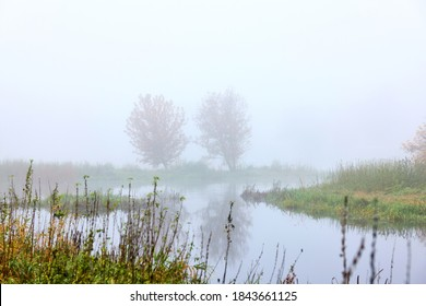Autumn - two trees on the river bank in the fog