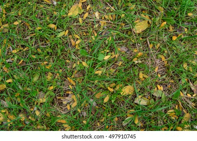 Autumn under our feet