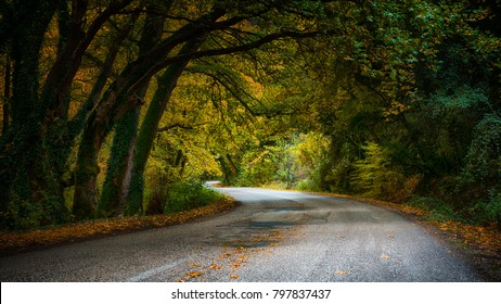 autumn utopia featuring a forest road with arched trees and fallen leaves