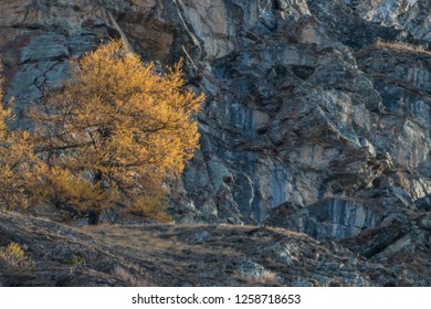 Autumn in Valsavarenche, Gran Paradiso National Park, Aosta, Aosta Valley, Italy