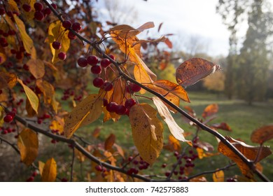 autumn vegetation detail