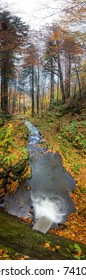 Autumn vertical panorama