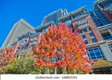 autumn view of charlotte  city skyline