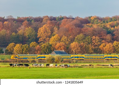 Autumn view of Dutch national park The Veluwezoom with a train passing by and cows in front