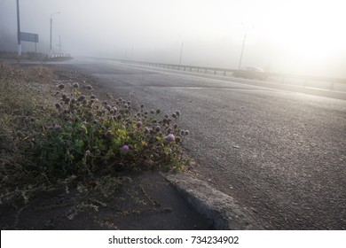 autumn view of the expressway in the fog