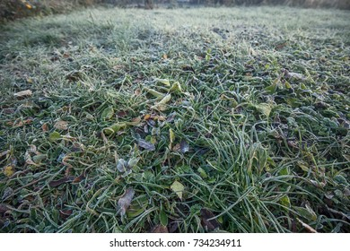 autumn view of the grass in the fog