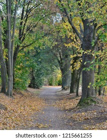 autumn view of the path between the old trees , southern Bohemia , Czech Republic